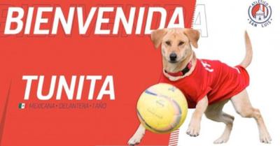 """""""Tunita"""", la perra que sigue las huellas de """"Tesapara"""""""
