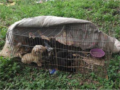Plantean aumentar la pena por maltratar a los animales