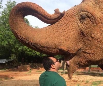 Maia sobrepasó expectativa de vida de los elefantes asiáticos