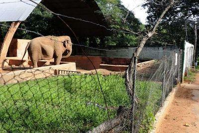 Veterinario repudia idea de Segovia de cerrar el Zoológico de Asunción