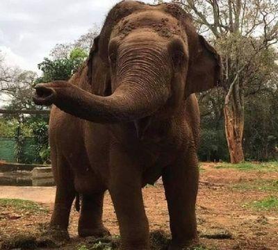 Edil propone audiencia pública para cierre del zoológico de Asunción