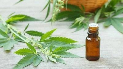Otorgan licencias para producción medicinal del cannabis