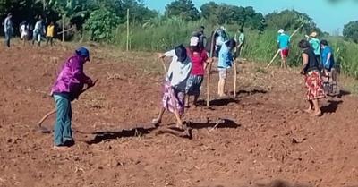 Comunidades indígenas se fortalecen como productores de alimentos
