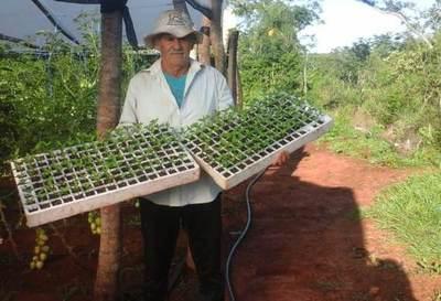 Familias que recibieron apoyo del Gobierno cosechan sus productos