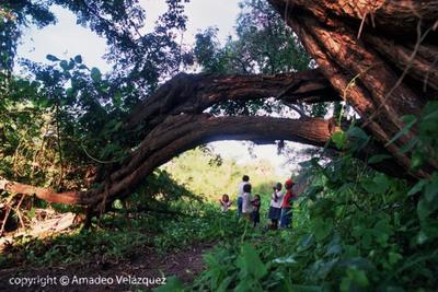 Protegerán más de 3.300 hectáreas de bosques del Chaco