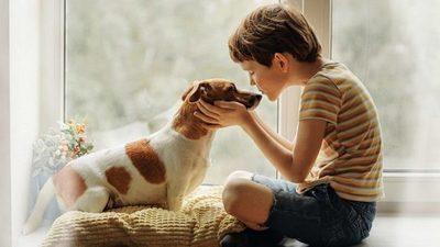 Las mascotas también deben ser cuidadas del coronavirus
