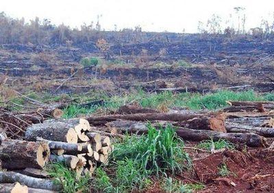 Bosques del Chaco serán protegidos bajo el régimen de servicios ambientales