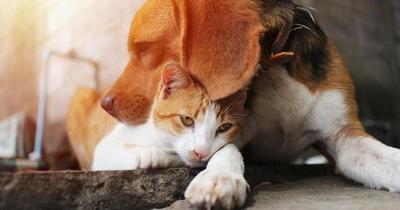 ¿Pueden las mascotas contagiarse de Covid-19?