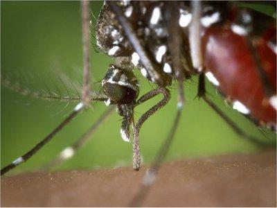 Con 53 muertes, finaliza   la epidemia de  dengue más grande   de últimos 20 años