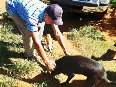 Salió de alta Rambo, el perro que fue baleado por un vecino