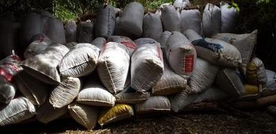 SENAD anuló más 51 toneladas de marihuana en Alto Paraná