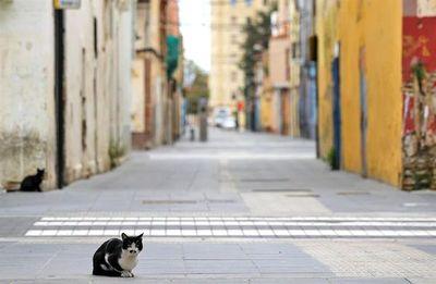 EE.UU.: Dos gatos son las primeras mascotas con COVID-19