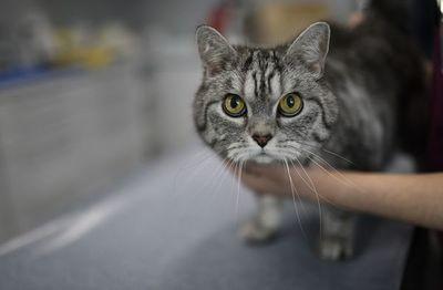 Francia pide a los enfermos de coronavirus limitar el contacto con sus gatos