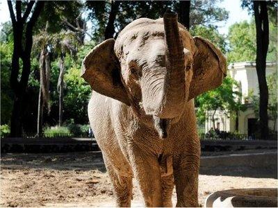 Brasil y Argentina reabren frontera para el traslado de elefanta a santuario