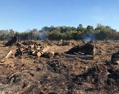 Detectan tala de árboles, quema de bosques y otros delitos ambientales en San Cristóbal