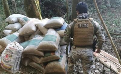 Incautan más de 3,7 toneladas de marihuana en campamento de Itapúa