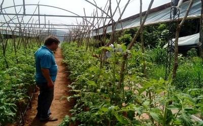 ¡Se pierde el tomate y el locote! FNC denuncia que gobierno no asiste a productores