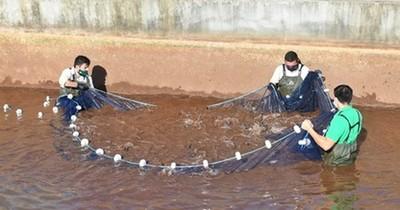 Itaipú alcanzó nuevo récord en producción de peces nativos