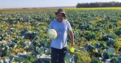 Productor hortícola insta a cultivar, al ser una alternativa rentable