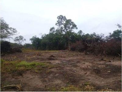Hallan explotación ambiental ilícita en San Alfredo