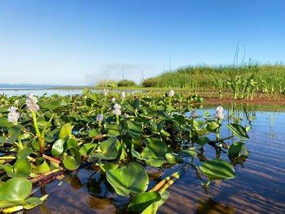 Buscan todo tipo de paliativos para frenar contaminación del lago Ypacaraí