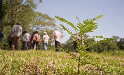 HOY / Invitan a plantación masiva de árboles durante el mes del medioambiente