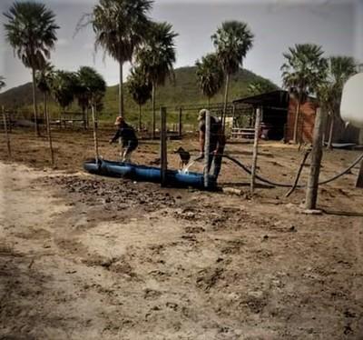 La sequía sigue latente en el Alto Chaco