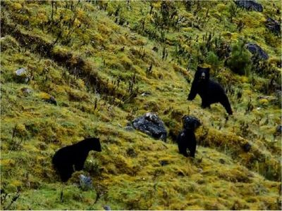 Santuario de osos resiste a las adversidades en Colombia