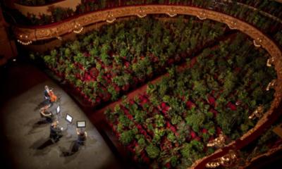 Organizan concierto para más de 2.000 plantas