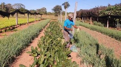 Septuagenario logra excelente producción hortícola