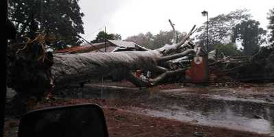 Capilla del Monte: Gigantesco árbol cayó encima de una ferreteria