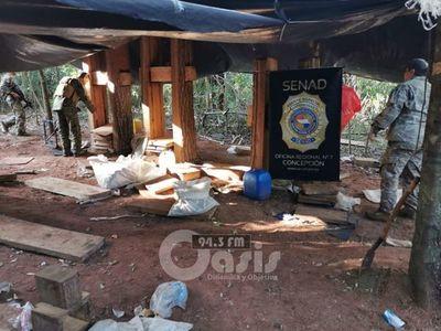 Senad desmantela campamentos de producción narco en Yby Yaú