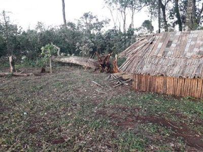 Temporal: Niña de 5 años murió aplastada por un árbol en Itapúa