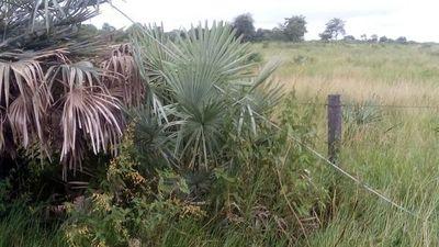 Poblaciones de Alto Paraguay, sin servicio de energía de ANDE