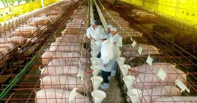 Paraguay, libre de peste porcina clásica