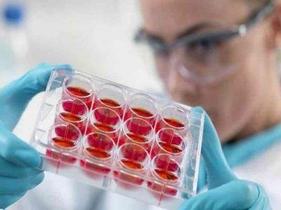 Descubren técnica para obtener células madre más eficientes