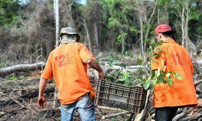 Inician trabajos de restauración forestal en Puerto Indio – Diario TNPRESS