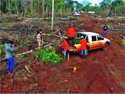 Fiscalía investiga a campesinos por  tala de árboles nativos   en reserva