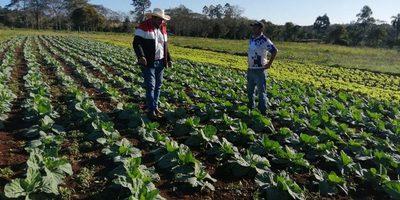 Gobernación de Alto Paraná invierte en invernaderos, insumos y diversificación – Diario TNPRESS