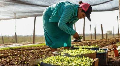 Reactivación económica: Programas Tekoporã y Tenonderã ayudarán a más familias