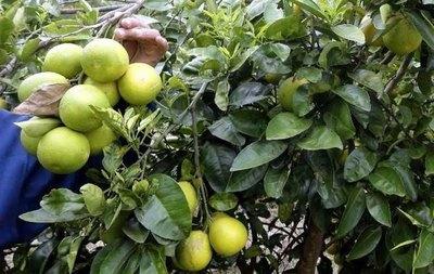 Karai que robó pomelos podría ir 10 años a la cárcel