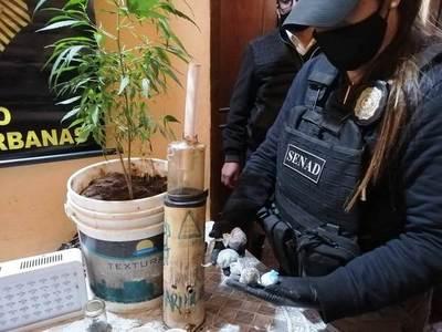 Distribuidor de drogas contaba con su propio invernadero en Luque • Luque Noticias