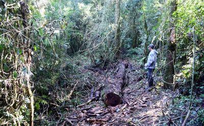 Denuncian tala furtiva en reserva forestal de 1.500 ha de   Bella Vista
