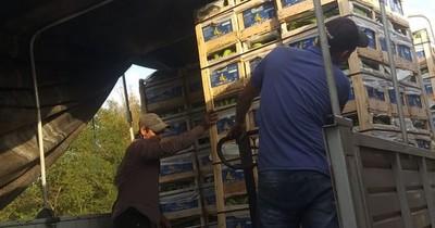 Producción de banana va rumbo al mercado argentino