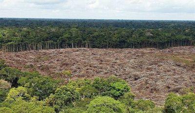 Productores luchan para mantener sus bosques en la Región Oriental