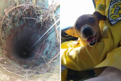 ¡Las imágenes de día! Bomberos rescatan a perrita que cayó a un pozo de más de 20 metros