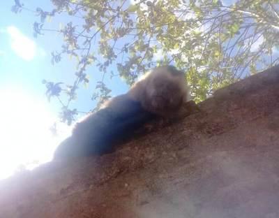 Mono extraviado en Mora Cué • Luque Noticias