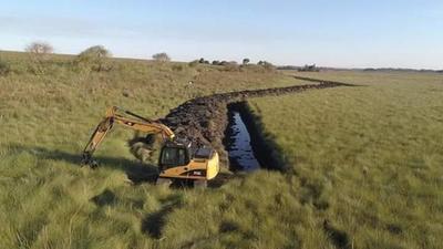 Fiscalía no investiga grave crimen ecológico en las tierras de los Ovelar en Mallorquín – Diario TNPRESS