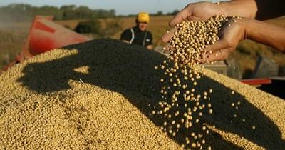 Brasil se posiciona en segundo lugar como comprador de la soja paraguaya