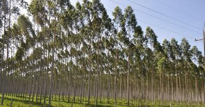 Instan a invertir en el sector forestal al tener una tasa de retorno rápido